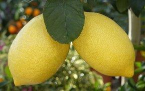лимоны 1